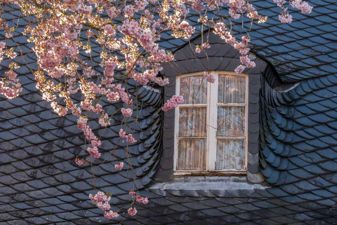 a roof in spring with flowers in foreground