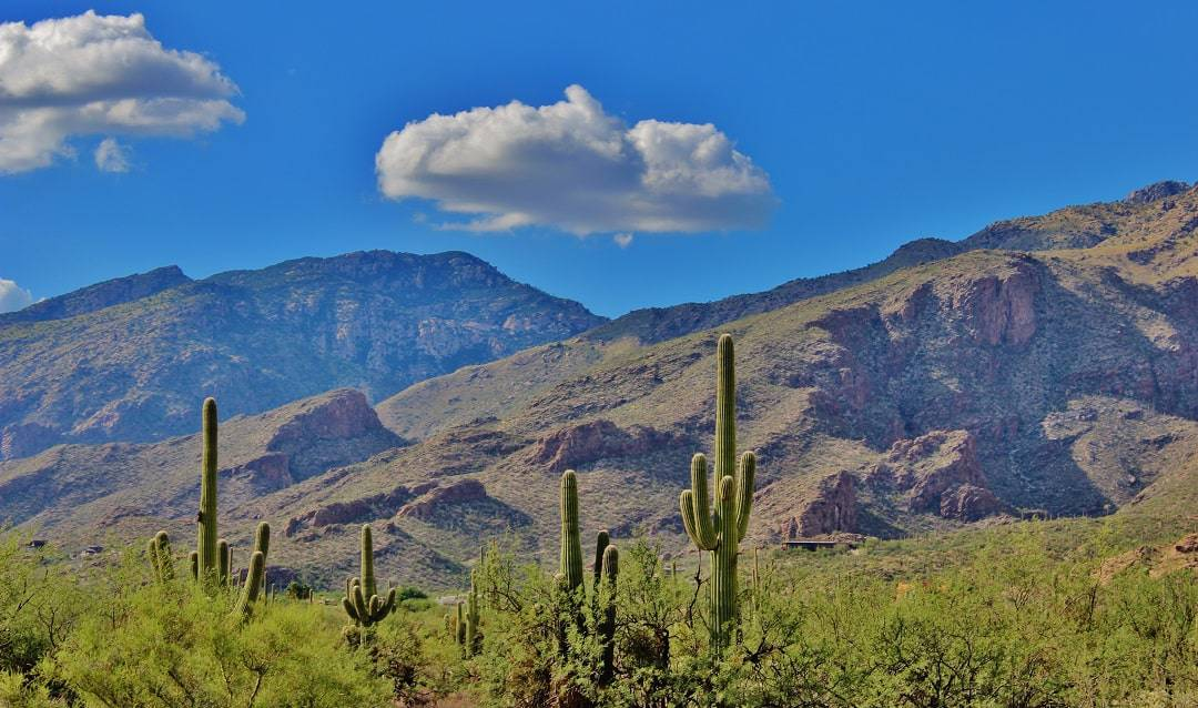a landscape with cactuses in Tucson