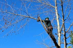 a man trims an overhanging branch from a tree